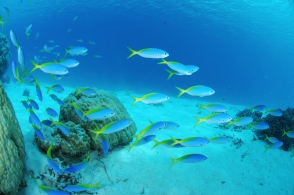 Blue Ocean Investing _ BROADGATE FINANCIAL